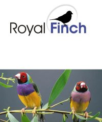 Royal Finch